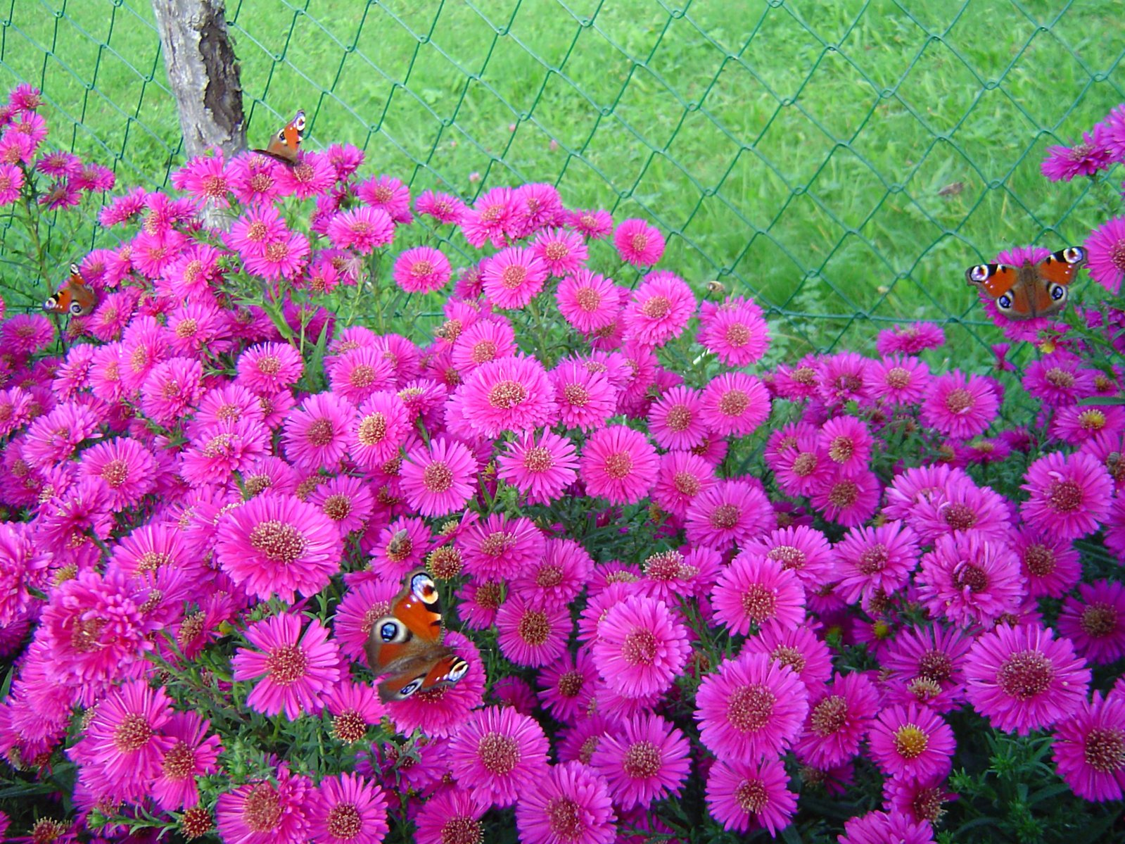Aster The Flowers Express Philippines